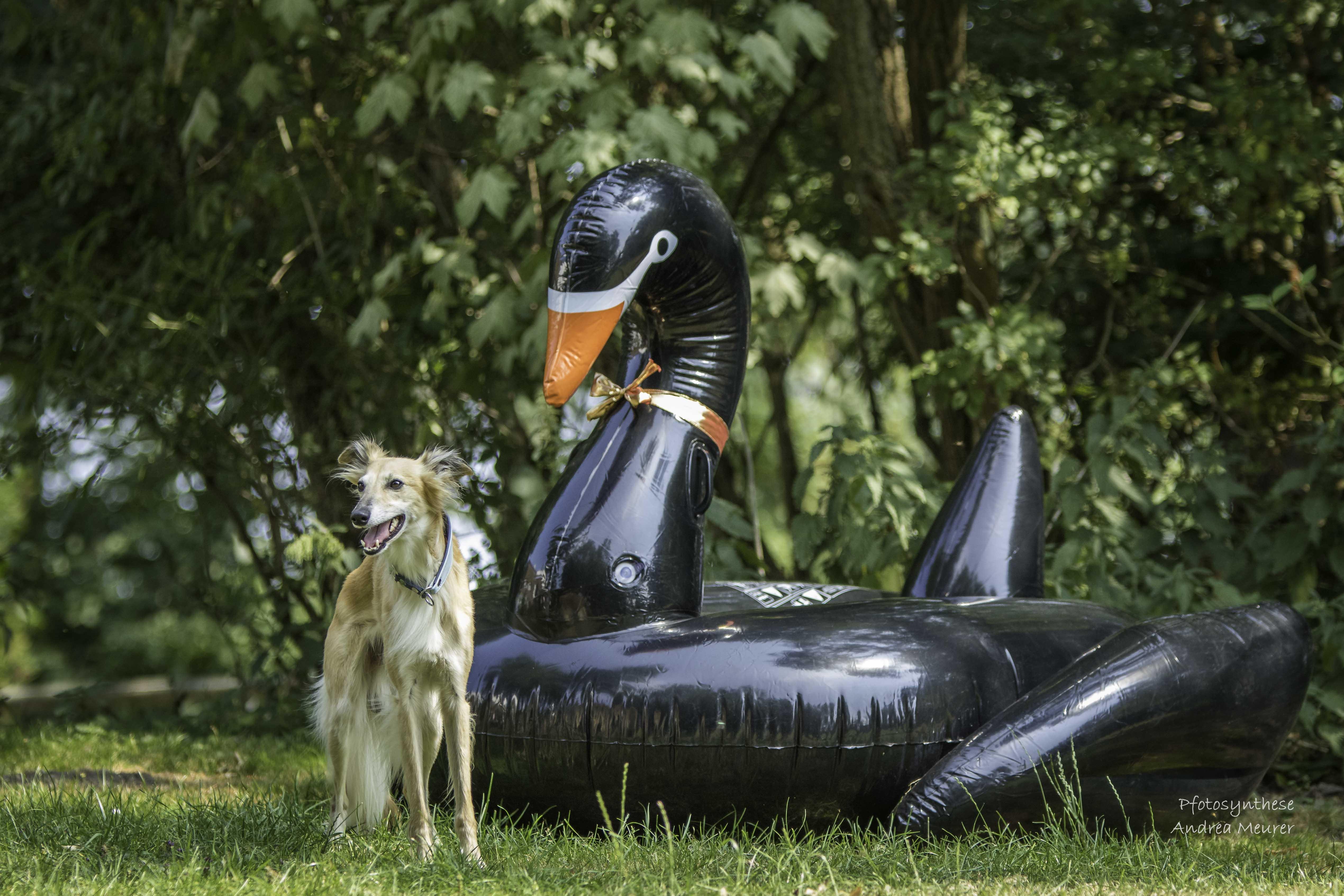 Großes Treffen der Schwäne zum 10 jährigen Jubiläum der schwarzen Schwäne