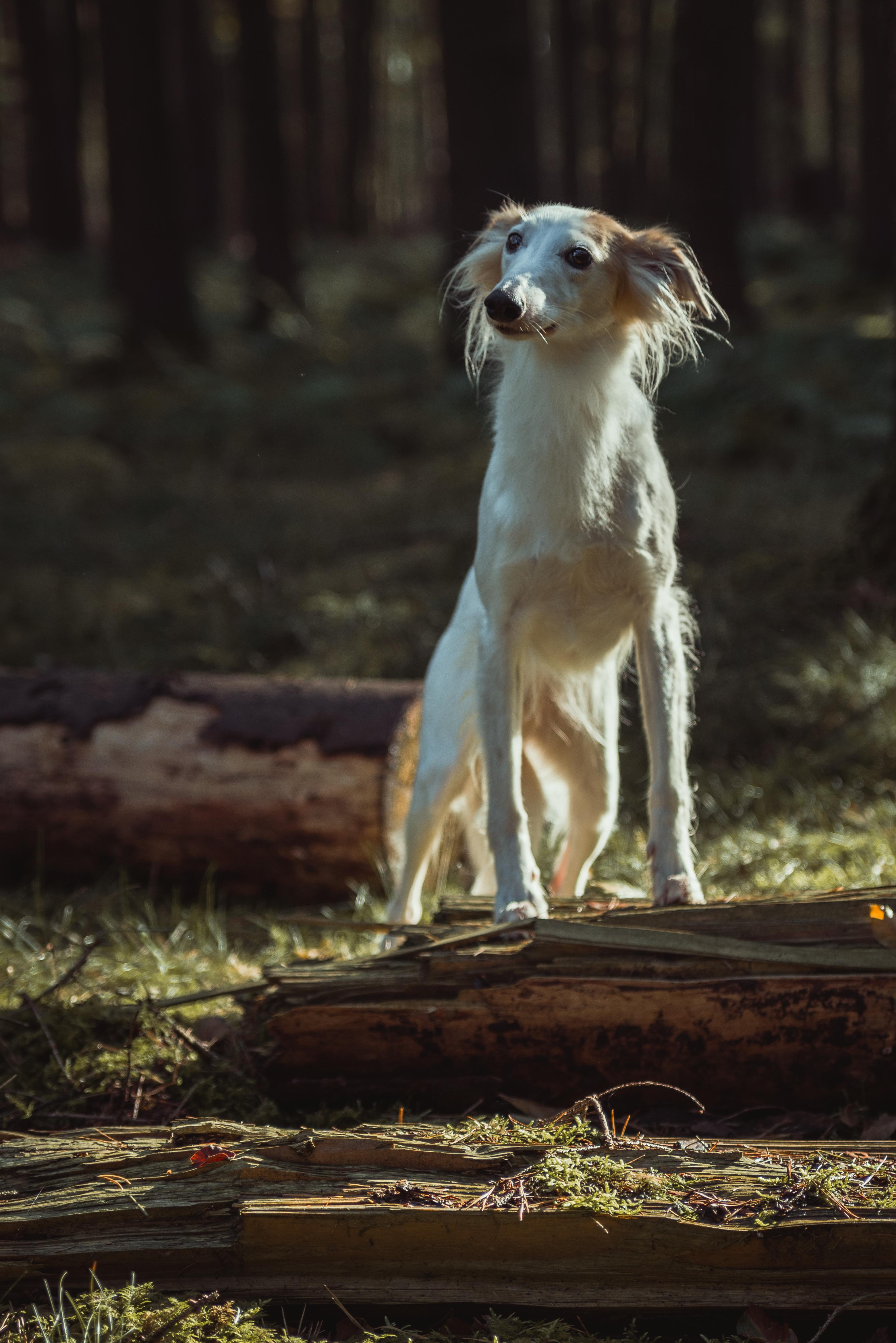 """Artikel erscheint: """"Windhunde als Therapeuten"""""""